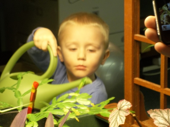 """Little man at work!""-  Amy  Rachel's grandson came by for a visit and gave our plants some TLC."