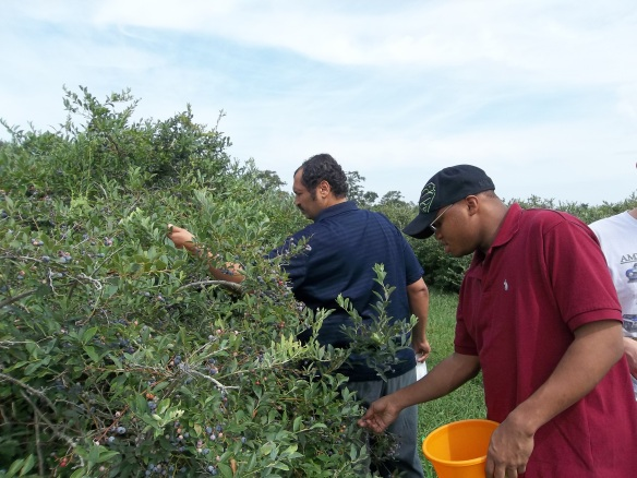 """Pick, pick, Pick away boys!!  Bring home some blueberries!!""- Amy    This week we took a little trip to the Mason's Beach fruit farm!!"