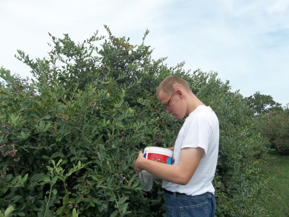 """Brandon wishing more berries will appear in his bucket ;) Blueberrie picking is hard work! - Amy"
