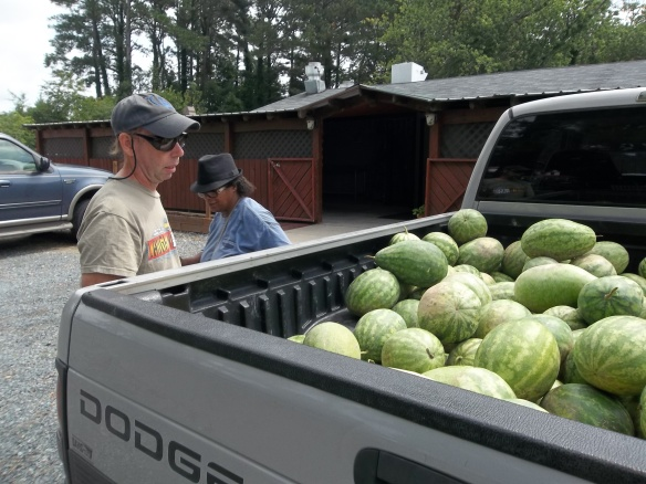 """David said........WOW!!  That is a lot of watermelons!""- Matt"