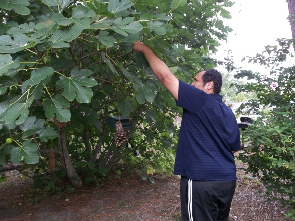 """Calling all figs, calling all figs!!  Watch out ........Zel is coming to pick you!""- Matt"