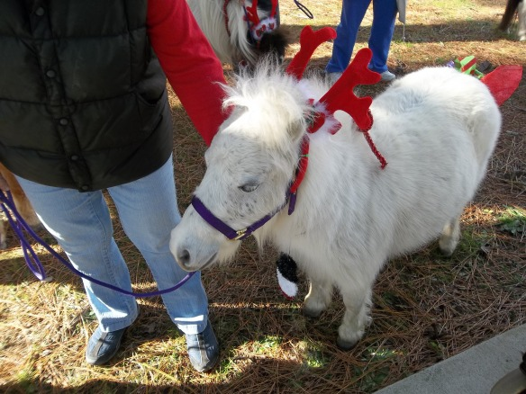 Look at this beautiful white miniature horse! Neigh!!!