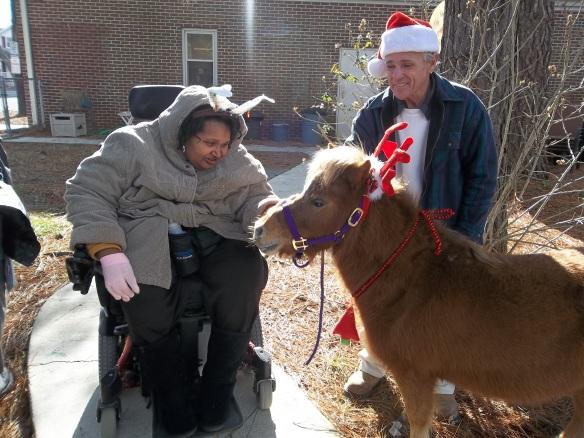 Amy meets a horse.